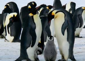 Crucero a la Isla Falkland