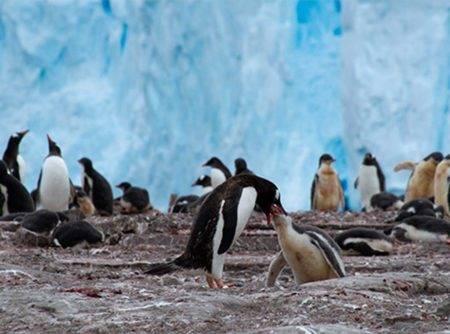 Descubre colonias de pinguinos con crucero expedición por la Antártida